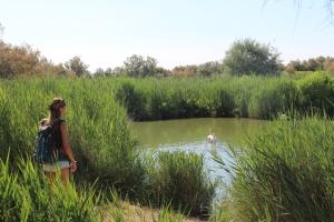 Le Parc Ornithologique de pont de gau