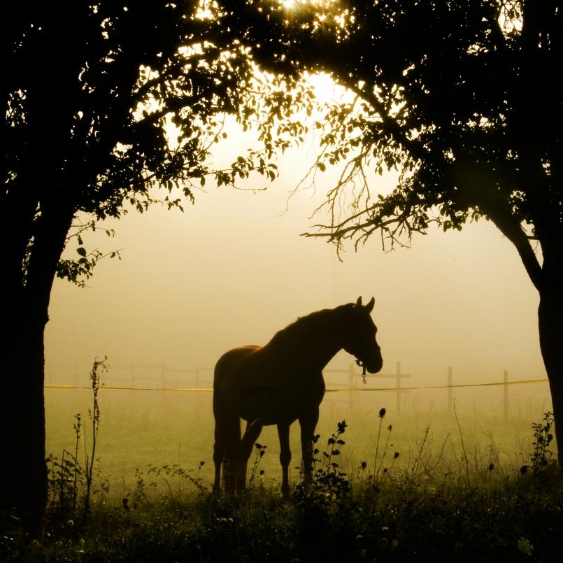 paard-7540